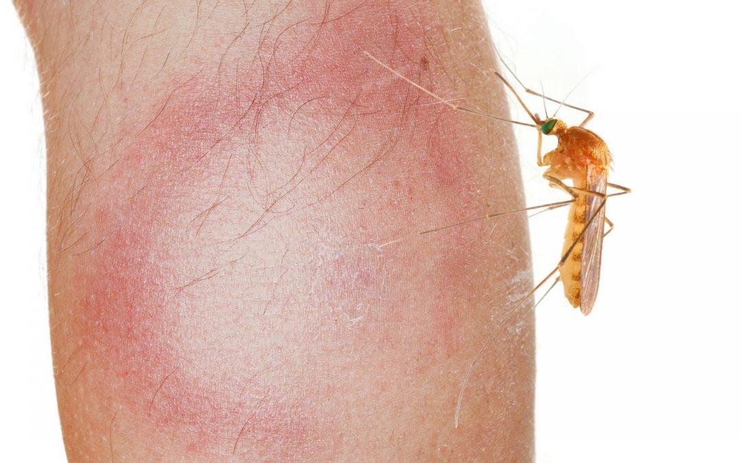 Besmetting zelfs door een mug of ander insect!