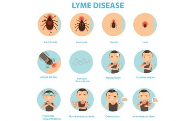 Waarom is Lyme zo moeilijk te genezen?