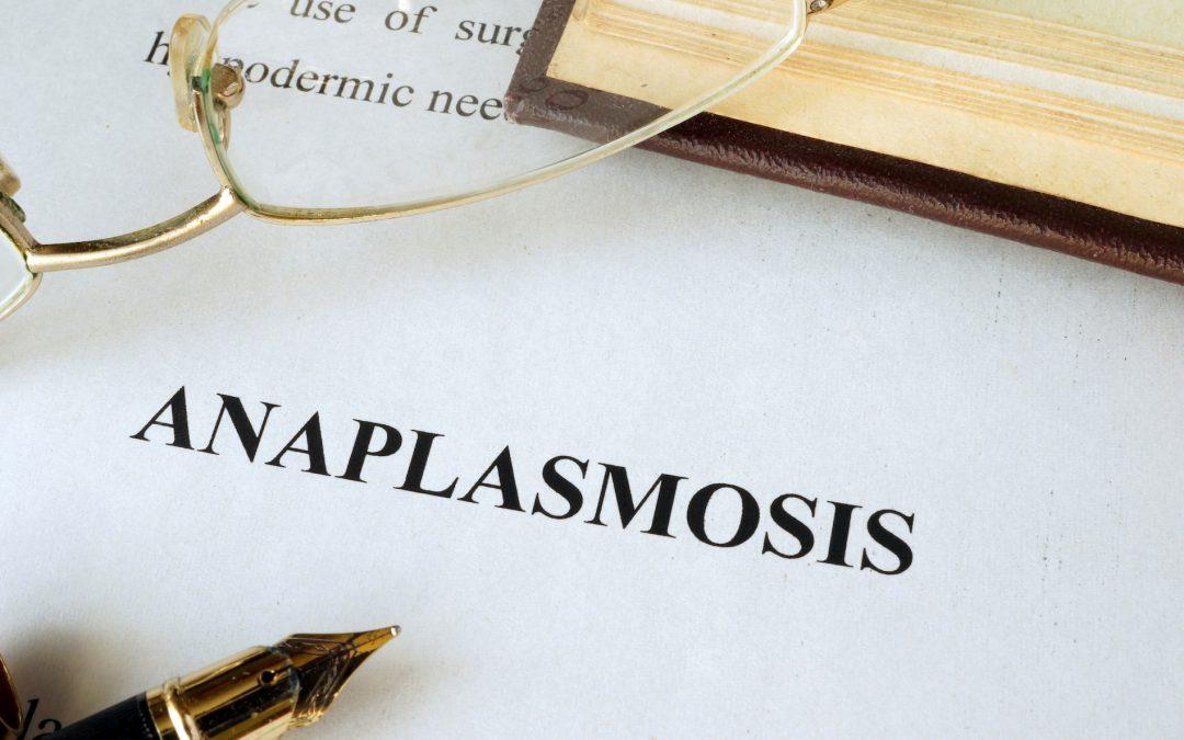 Co-infecties bij Lyme: Ehrlichia/Anaplasma