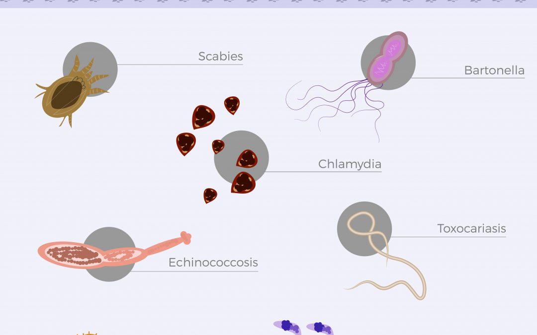 Co-infectie bij Lyme: Bartonella