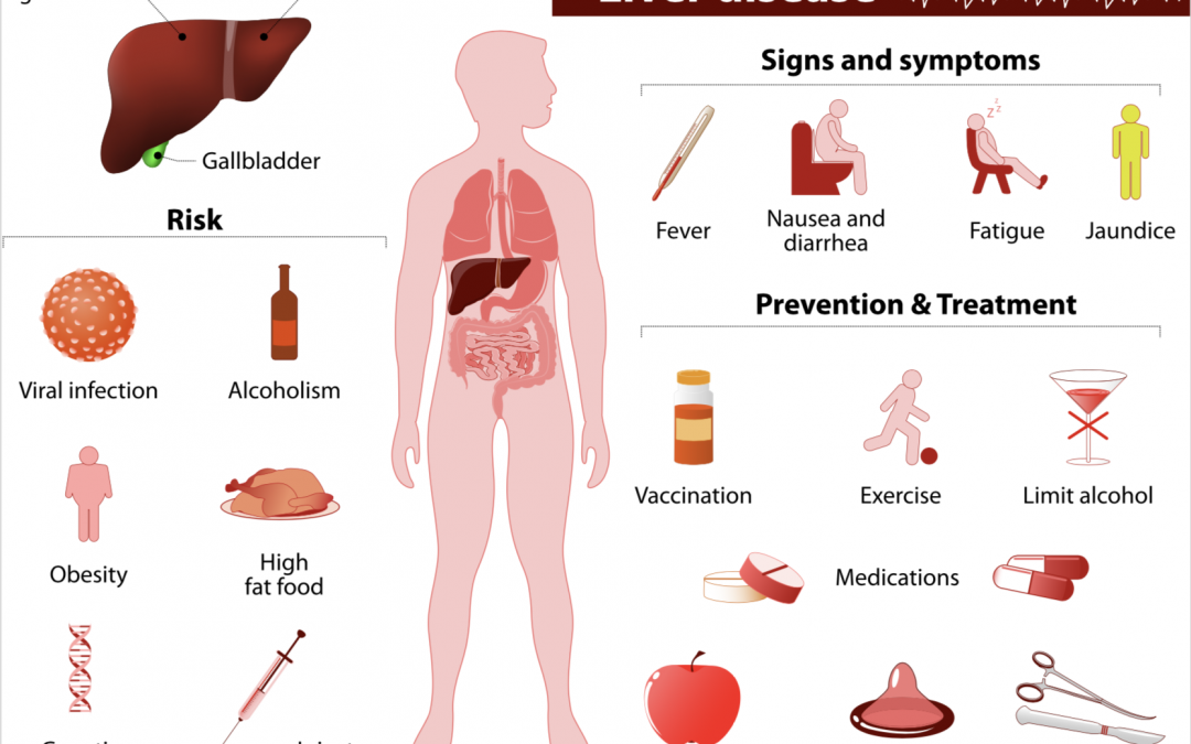 Hoe staat het met jouw lever?