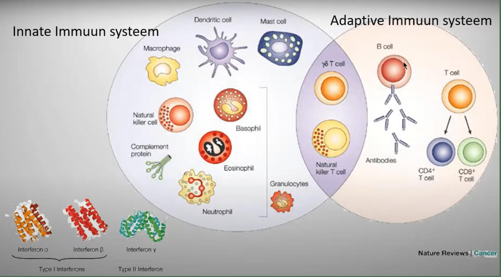 Wanneer het afweersysteem de controle kwijt is – Cytokinestorm (deel 4)